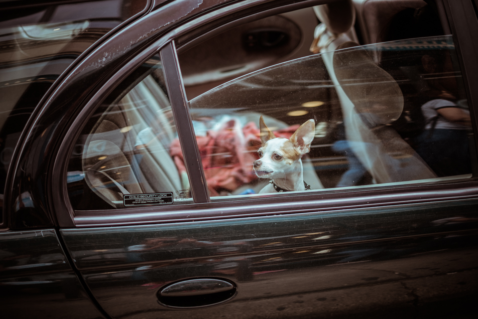 ateljelena-fotograf-chicago-webb-117